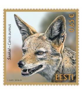 Estonian fauna - Golden jackal